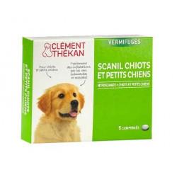 Clément Thékan Scanil Chiots et Petits Chiens